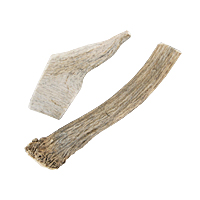 Elk Antler - 5-7 in., Medium