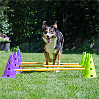 Dog Agility Cavaletti Kit