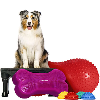 BUNDLE DEAL: Canine Gym in a Box