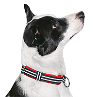 ComfortFlex Limited Slip Padded Collar