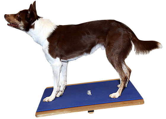 FitPAWS Giant Rocker Board