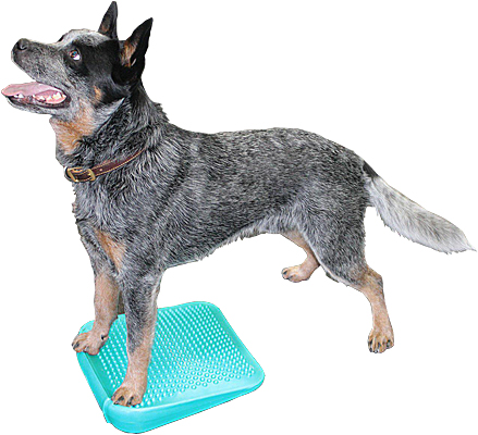 FitPAWS Balance Ramp
