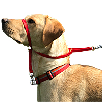 K9 Bridle for Dogs