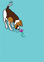 Greeting Card—Happy Birthday, Dog Sniffing Flower