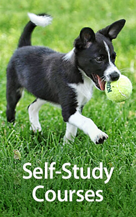 See all of the self-study classes