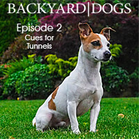 Backyard Dogs Episode 2 - Cues for Tunnels