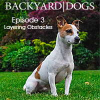 Backyard Dogs Episode 3 - Layering Obstacles