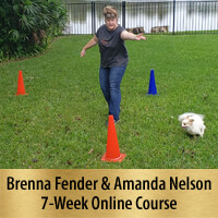 Beyond One More Step - 7-Week Online Course, Premier Registration