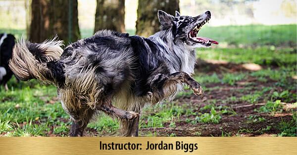 Tricks for Dog Sports - 16-Week Online Course, Premier Registration