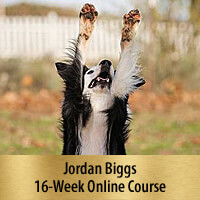 Tricks for Dog Sports - 16-Week Online Course, Premier Registration