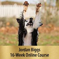 Tricks for Dog Sports Online Course - Premier