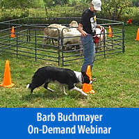 Positive Herding - On-Demand Webinar