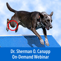 Cranial Cruciate Injury, A Global Approach to Treatment - On-Demand Webinar
