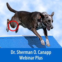 Cranial Cruciate Injury, A Global Approach to Treatment - Webinar Plus