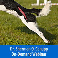 Iliopsoas Strains, Common in Humans & Dogs - On-Demand Webinar