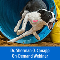 Medial Shoulder Syndrome, Why Is It Becoming So Common? - On-Demand Webinar