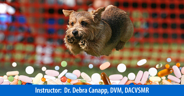 Nutraceuticals, Supplementation for Agility/Sporting/Working Dogs - On-Demand Webinar