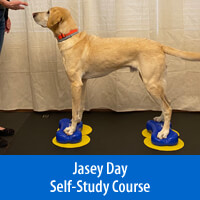 Bring on the Big Dogs - Self-Study Course