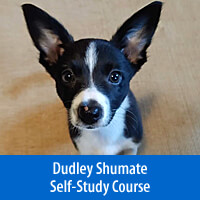 Journey with Ernie, Lessons in Learning, Life Skills & Agility - Self-Study Course