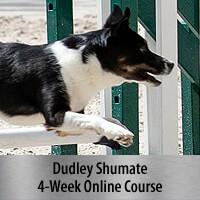 Go, Whoa & Yo - Teaching Modes of Focus - 4-Week Online Course, Standard Registration