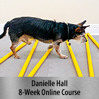 All Things Cavaletti - 8-Week Online Course, Standard Registration