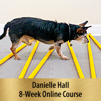 All Things Cavaletti - 8-Week Online Course, Premier Registration