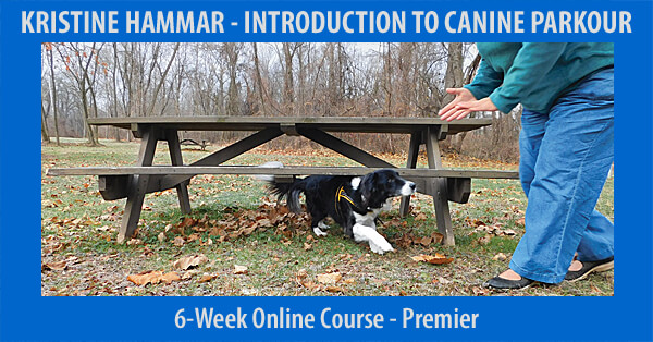 Introduction to Canine Parkour - 6-Week Course, Premier Registration