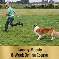 Independent Stopped Dogwalks - 8-Week Online Course, Premier Registration