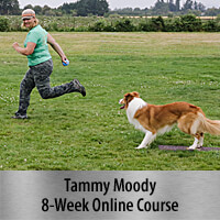 Independent Stopped Dogwalks - 8-Week Online Course, Standard Registration