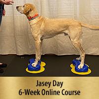 Bring on the Big Dogs - 6-Week Online Course, Premier Registration