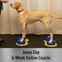 Bring on the Big Dogs - 6-Week Online Course, Standard Registration