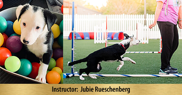 My Awesome Puppy - 8-Week Online Course, Premier Registration