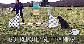 https://www.cleanrun.com/category/learning_center/dog_agility_instructors/tracy_sklenar_online_agility_classes/index.cfm
