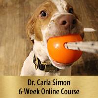 Laser Focus, Play, and Impulse Control Games - 6-Week Online Course, Premier Registration
