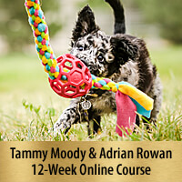 Building Confidence for Motivation & Speed - 12-Week Online Course, Premier Registration