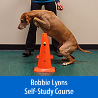 Focus on Jumping - Self-Study Course
