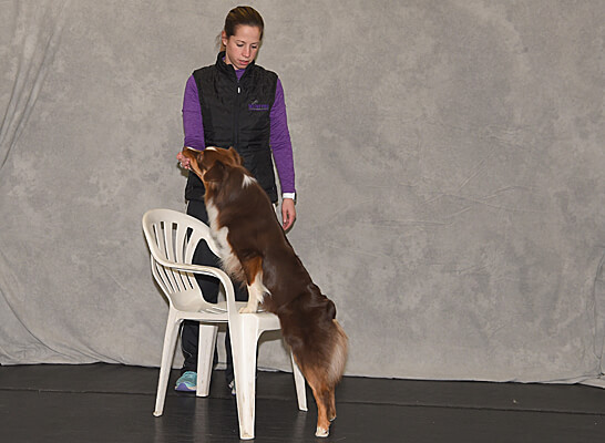 Warm Up & Cool Down of the Canine Athlete - Demo Videos