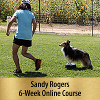 B.A.M. Pre-Agility Foundation Training - 6-Week Online Course, Premier Registration