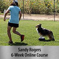 B.A.M. Pre-Agility Foundation Training - 6-Week Online Course, Standard Registration