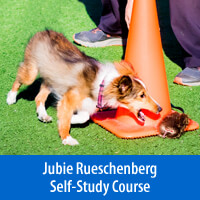 My Awesome Puppy Part 1, Age 6 to 16 Weeks - Self-Study Course