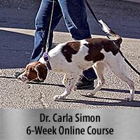 Scent Detection Foundation - 6-Week Online Course, Standard Registration