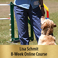 In the Connection Zone - 8-Week Online Course, Premier Registration