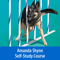 Weaves That Wow: Improve Your Weave Poles Self-Study Course