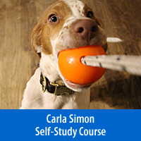 Laser Focus, Play, and Impulse Control Games - Self-Study