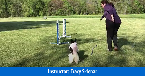 The Handler's Toolbox, The Opposite Arm - Self-Study Course