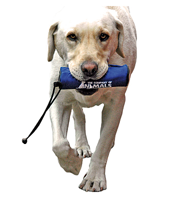 Clix Retriever Food Trainer