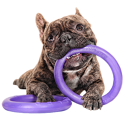 Puller Interactive Dog Toy - Mini