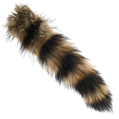 Raccoon Tails