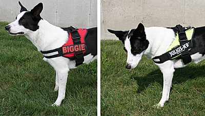 Product Details: Julius K9 Original Power Harness