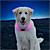 Pink on dog